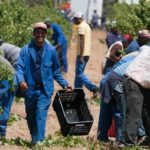 List Of Agricultural Cooperatives In South Africa