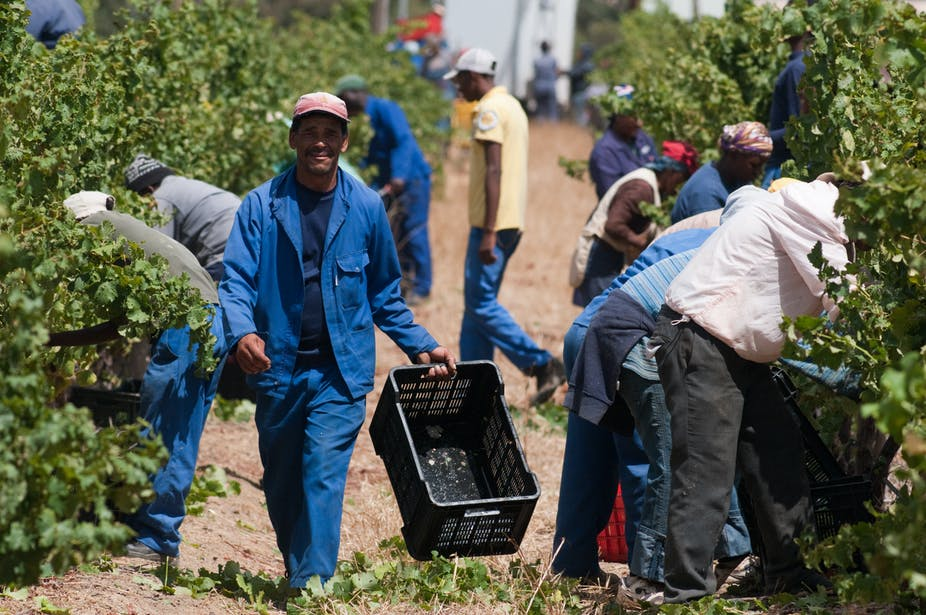 Agricultural Cooperatives In South Africa